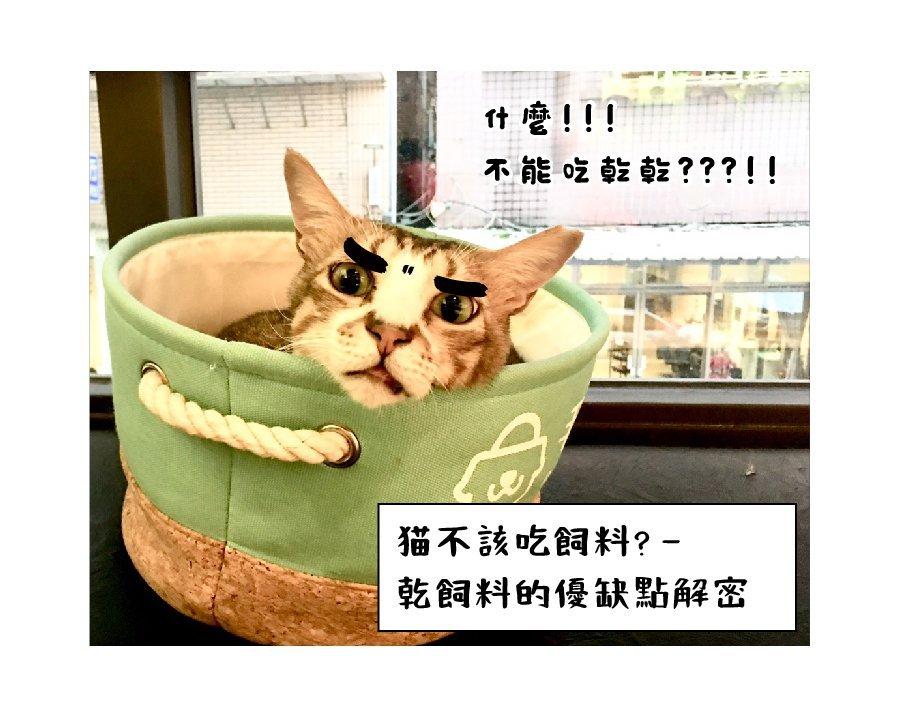 貓咪乾飼料