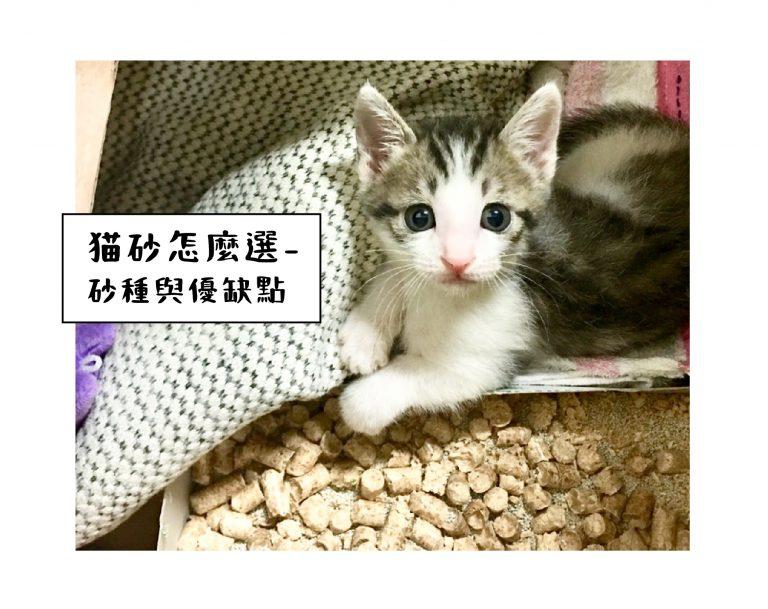 貓砂 種類