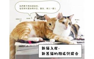 新貓舊猫 相處與磨合- 圖片