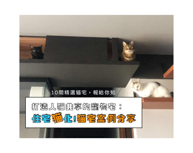 貓宅案例分享 打造人與貓共享的寵物宅:住宅貓化